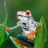 What is this little guy? - last post by Froggy the Great